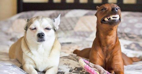 25 fotografias que comprovam que dois animais de estimao so melhores que um
